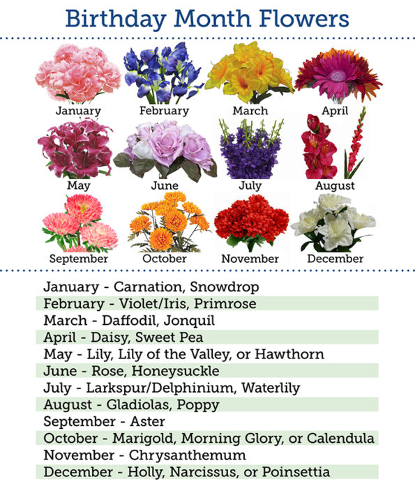 And Finally In The United States Primrose Is One Of Celebrated Birth Flower For All Those Born February It S Meaning Conveys Modesty